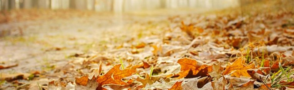 Přichází zima a stromy se zbavují listové pokrývky. Jak tento úkaz funguje ?